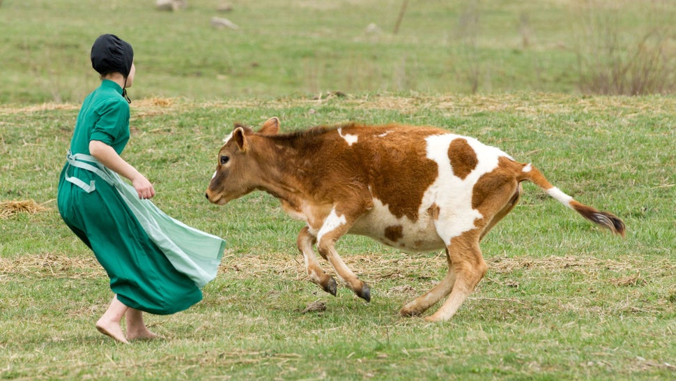 Barnyard dust offers a clue to stopping asthma in children