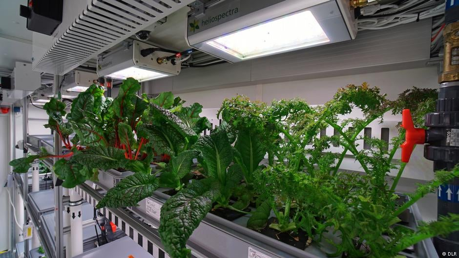 These Superb Antarctic Veggies Are A Tasty Preview For A Menu On Mars