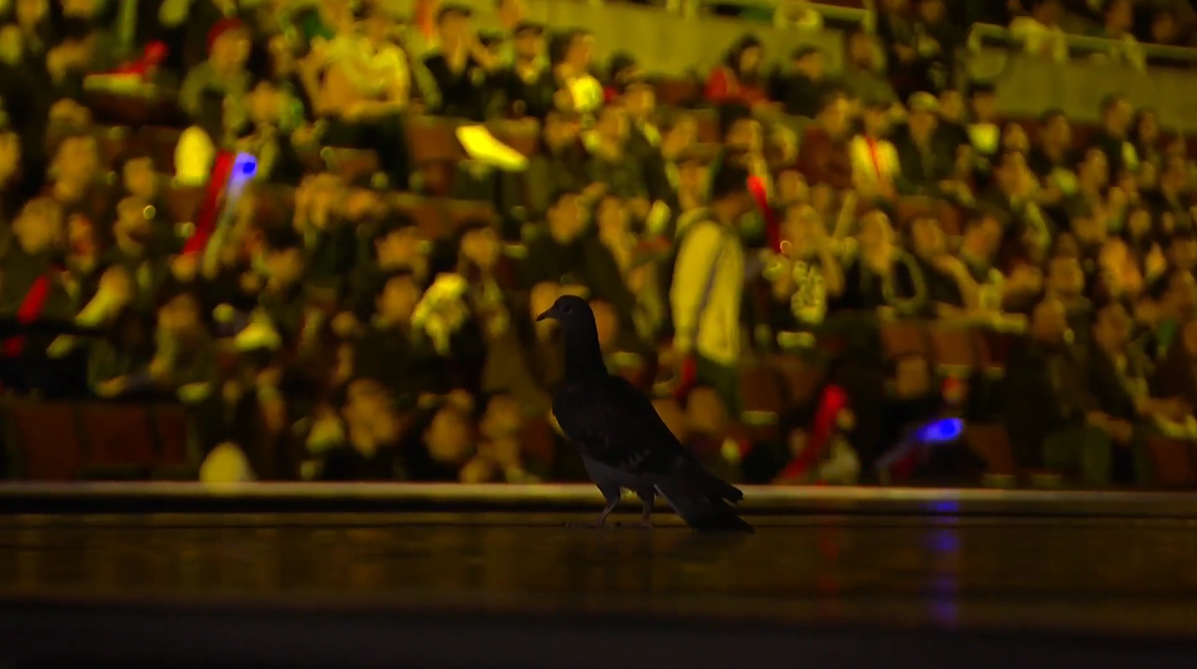 Pigeon Steals Play Of The Game At League Finals