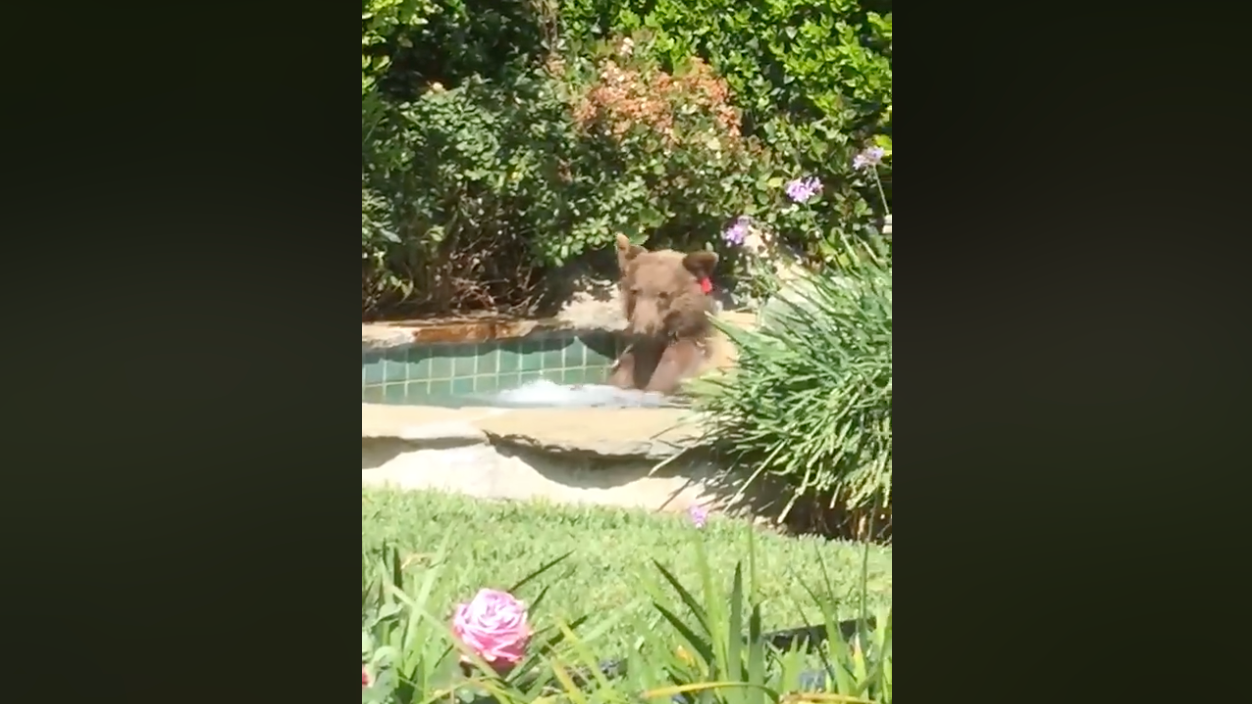 It's Time To Log Off And Kick It Like This Chill-Arse, Margarita-Drinking Bear