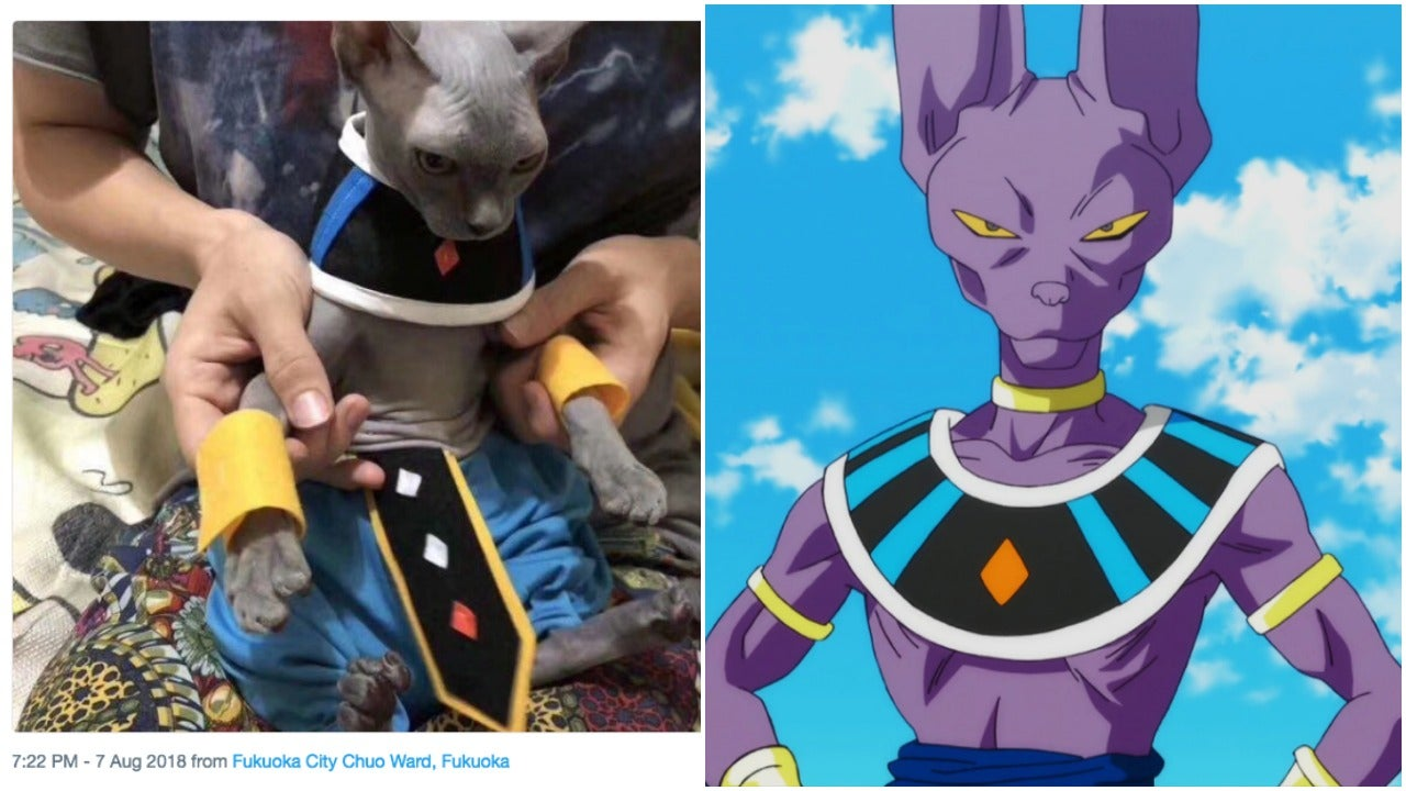 This Cat Does An Excellent Cosplay Of Beerus From Dragon Ball