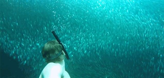 Swimming in a Vortex of Sardines Looks Quite Beautiful