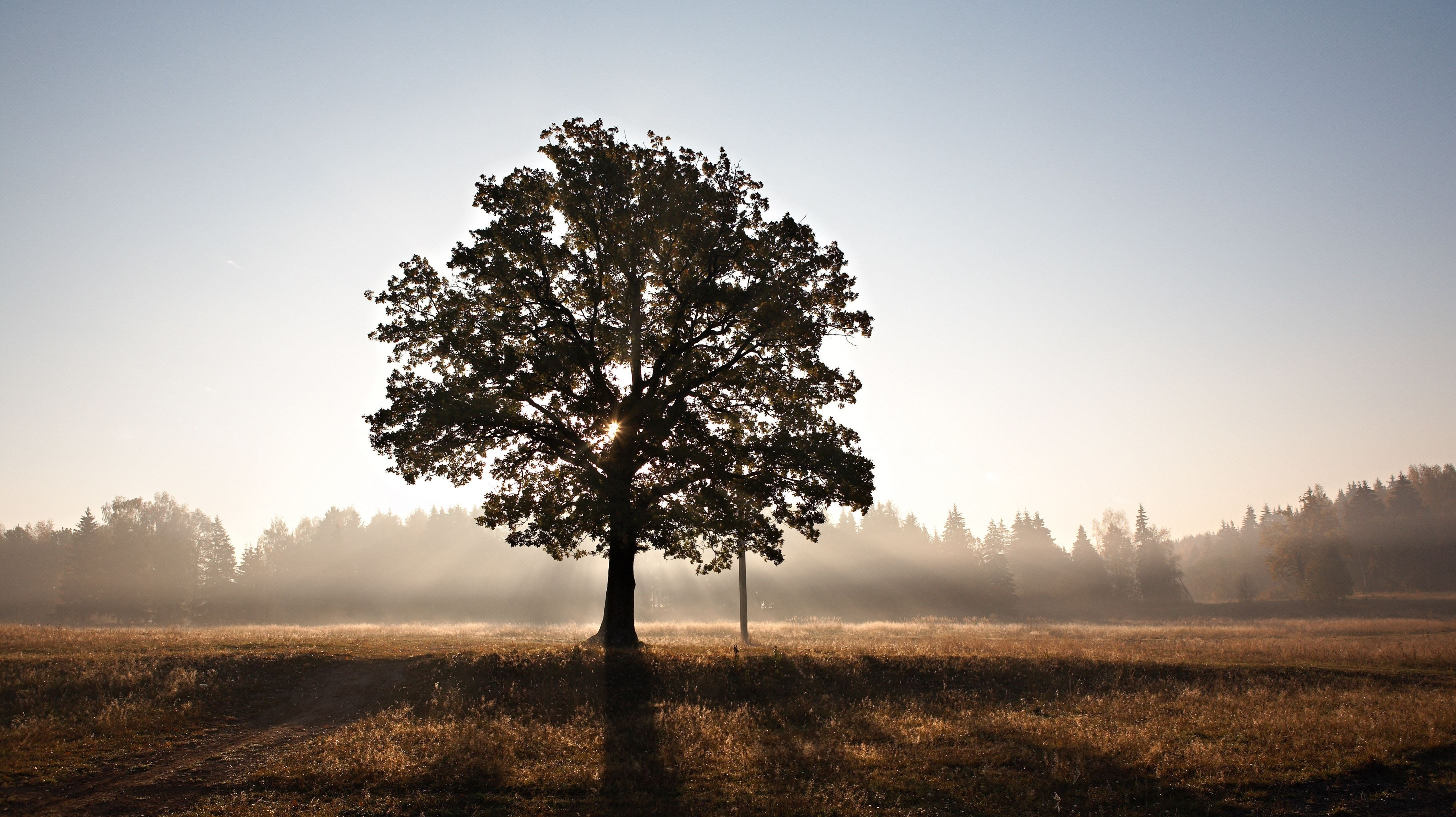 Make Your Own 'Family' Tree For Creative Inspiration