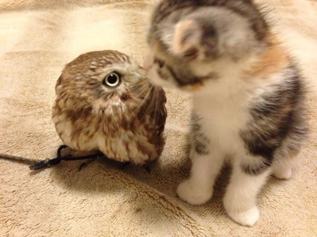 When a Cat and an Owl Develop a Beautiful Friendship