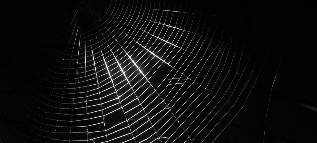 Spiders Dosed With Graphene Can Spin Stronger Silk