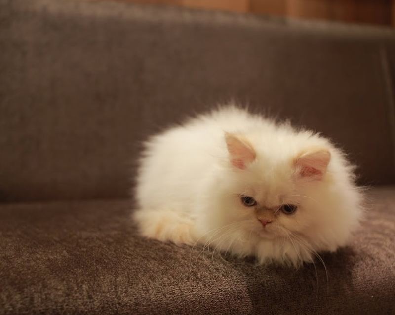 Japanese Cat Cafes Are More Fashionable Than Ever
