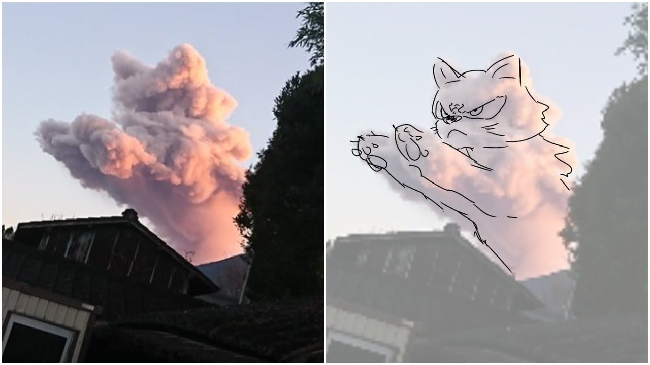 I Cannot Unsee This Cat
