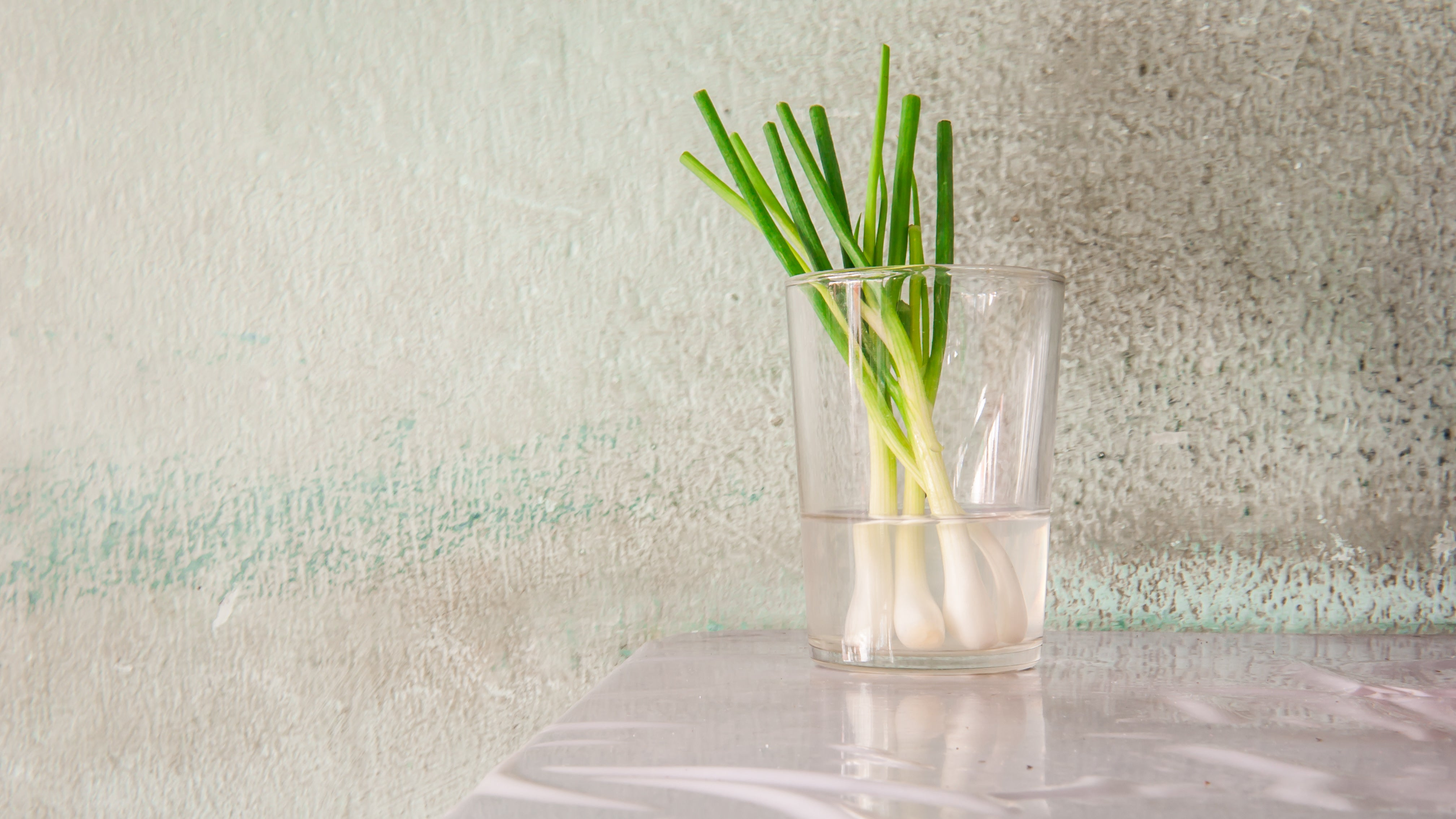 Regrow Green Onions In A Cup Of Water