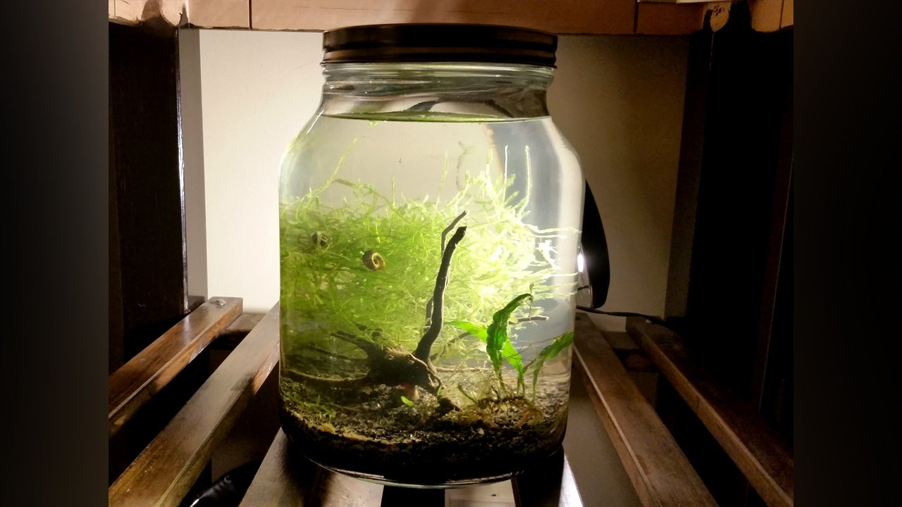Make An Indoor Water Garden In A Jar For Carefree Greenery
