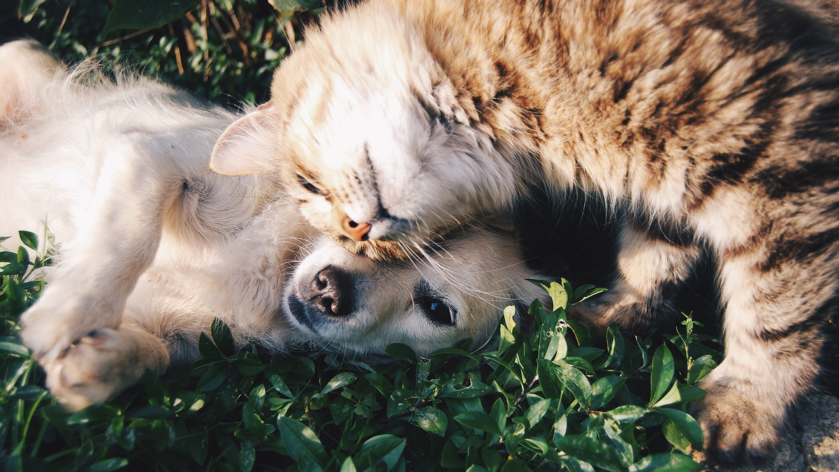 Create A Family 'Pet Contract' So You're Not Stuck With All The Dirty Work