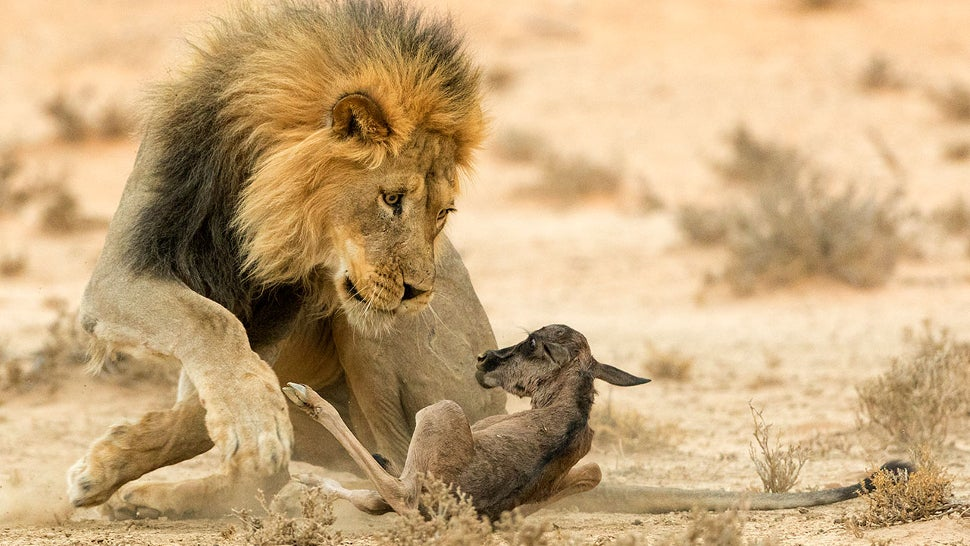 Wildlife Photo Contest Shows Nature Can Be Cruel, But Also Kind
