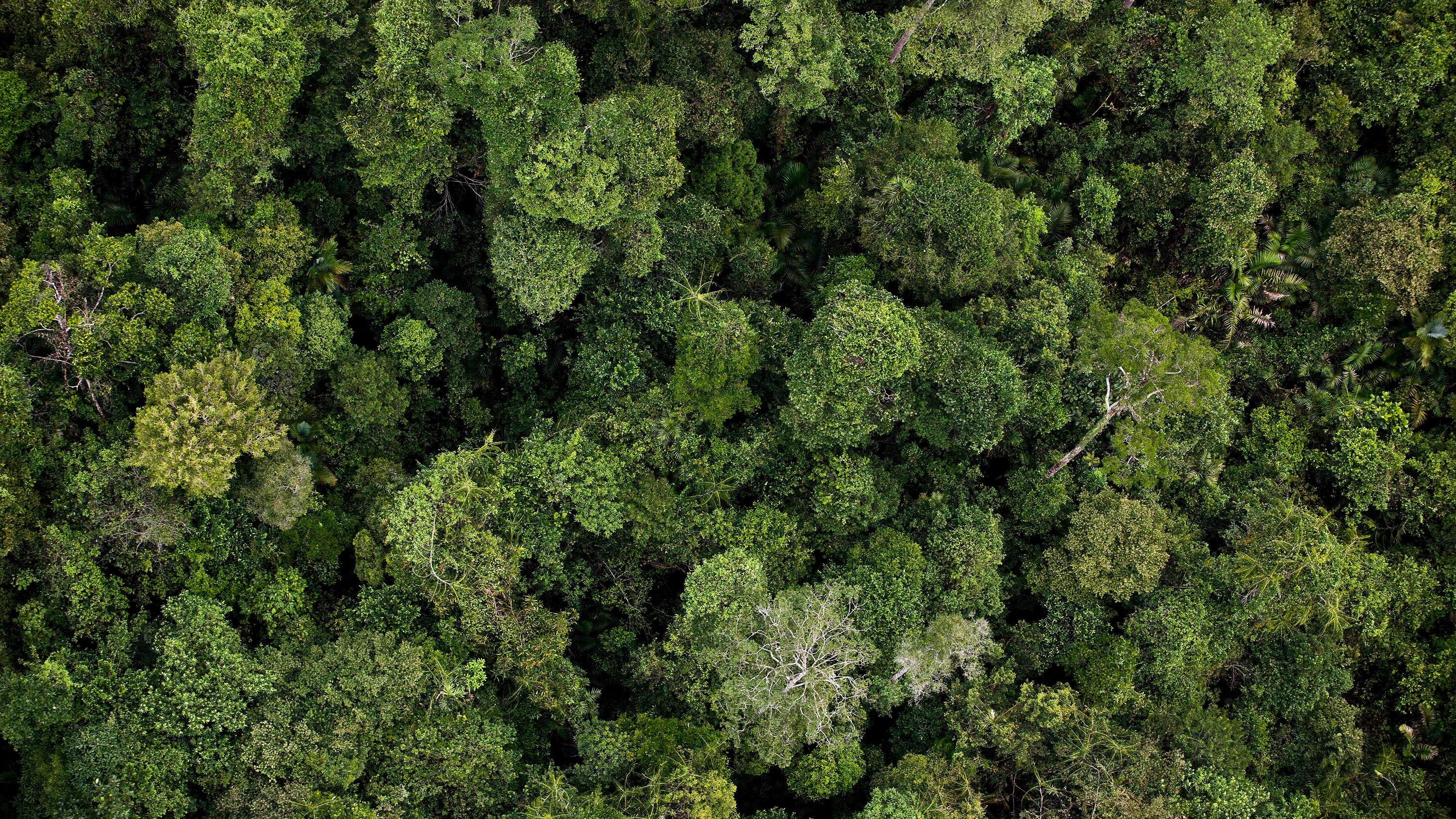 Calculation Shows We Could Add A US-Sized Forest To The Planet To Fight Climate Change