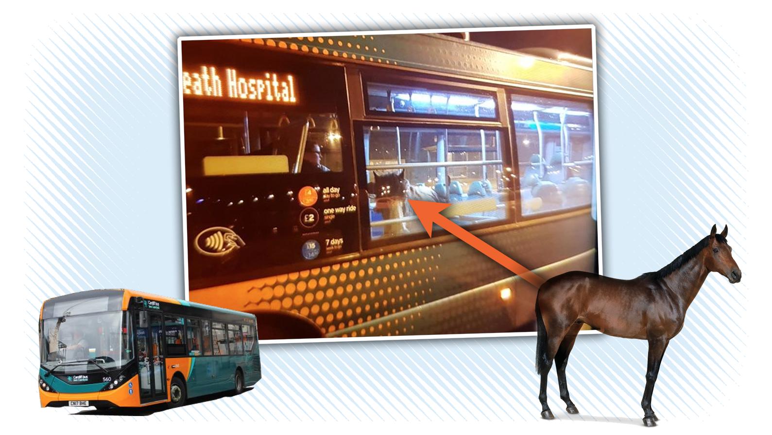 Horse Rides Bus