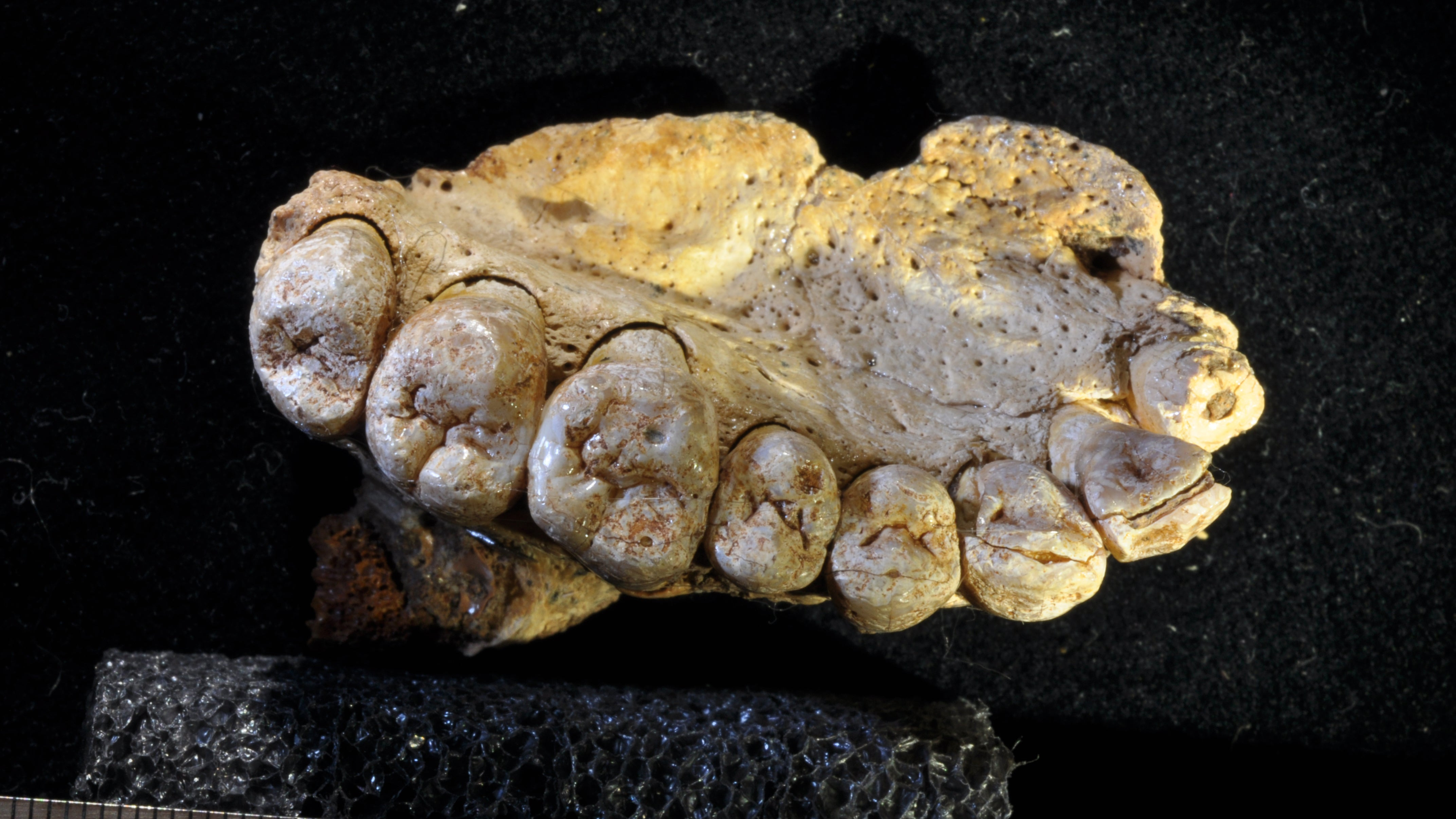 Stunning Fossil Discovery Pushes First Human Migration Out Of Africa Back 50,000 Years