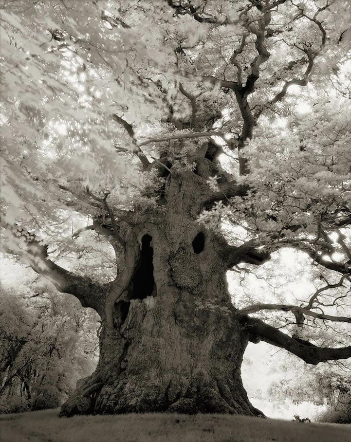 Extraordinary pictures of the most ancient trees on Earth