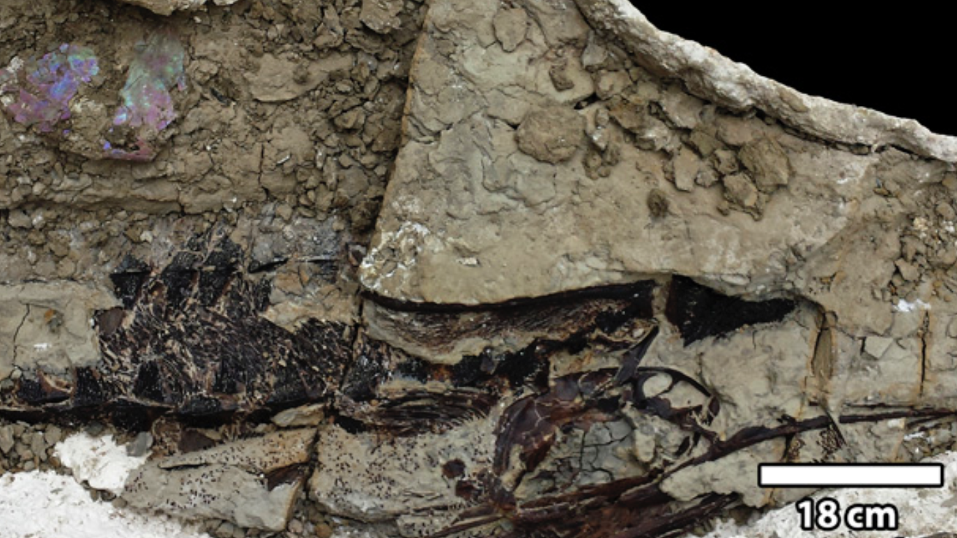 Scientists Find Fossilised Fish That May Have Been Blasted By Debris From Asteroid That Ended The Dinosaur Age