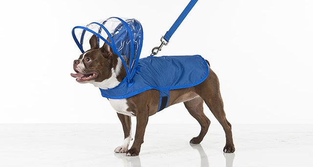 If You Have a Dog, You Can't Miss This Gadget Guide for the Spring