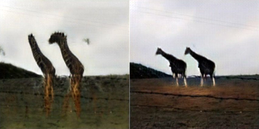 Finally, A Neural Network Can Turn A Bunch Of Sheep Into Some Decent Giraffes