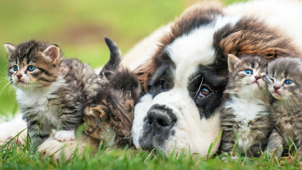 Let Your Browser Tabs Cheer You Up With Puppies And Kittens