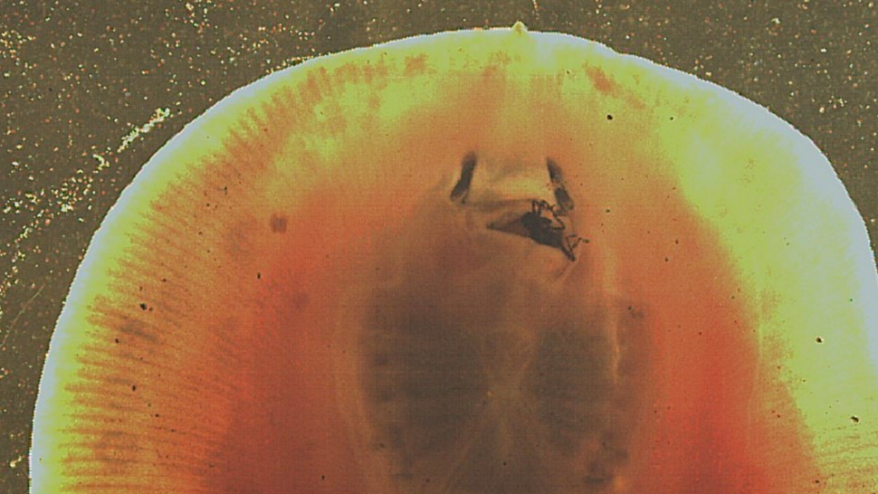Stingrays Chew Their Food Like Humans And Boy Does It Look Freaky