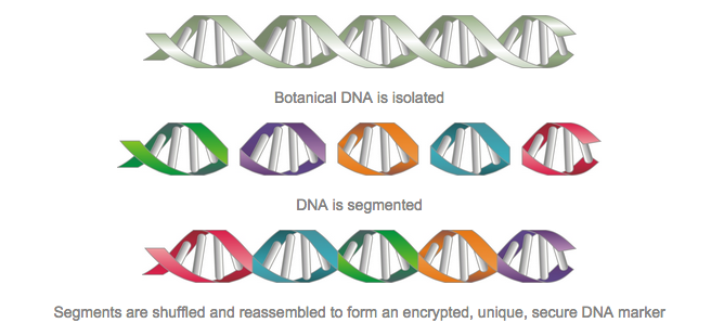 Inside the Forensic Lab That Fights Crime and Counterfeits With DNA
