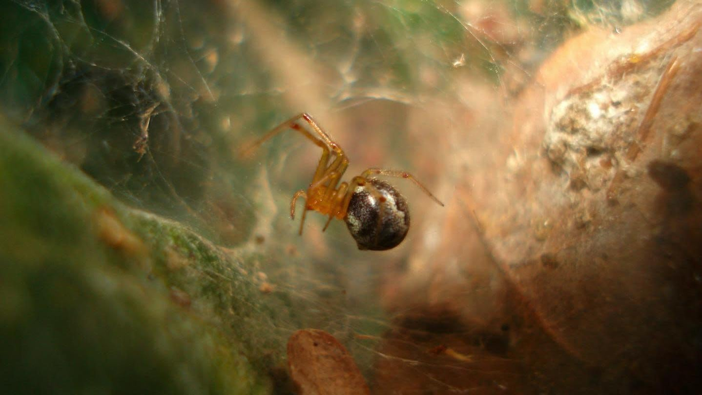 Hurricanes And Climate Change Might Make Spiders More Aggressive
