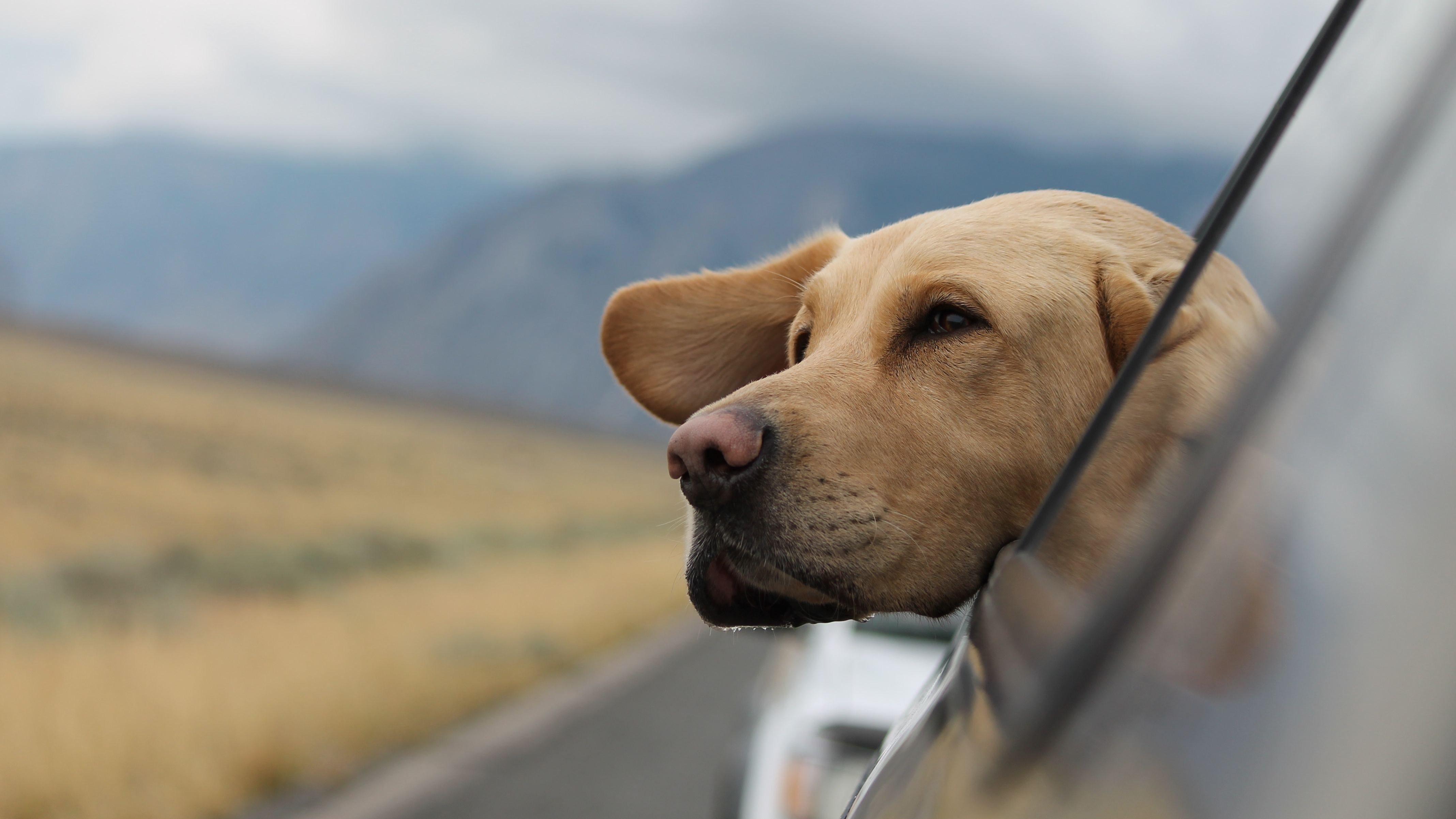 How To Dog-Proof Your Car