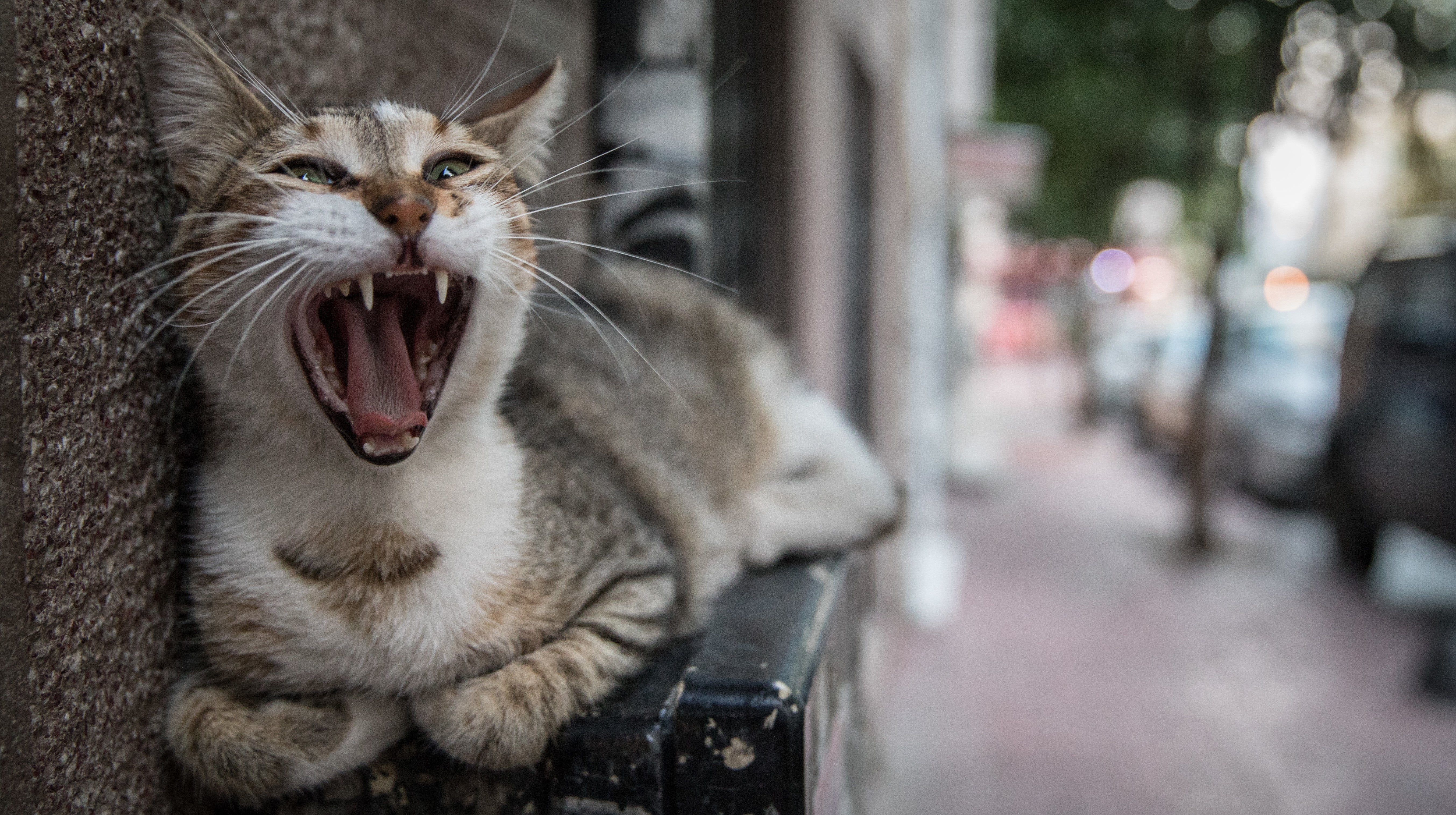 Cat Food Foils Scientists