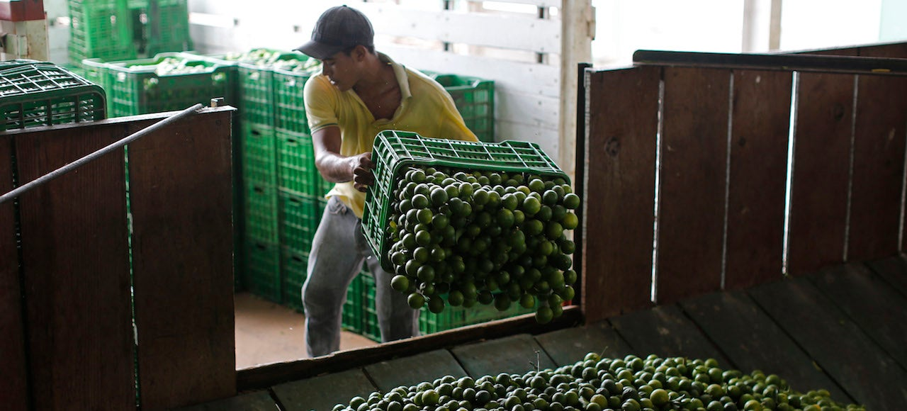 How Mexico's Drug Cartels Are Driving Up the Price of Limes