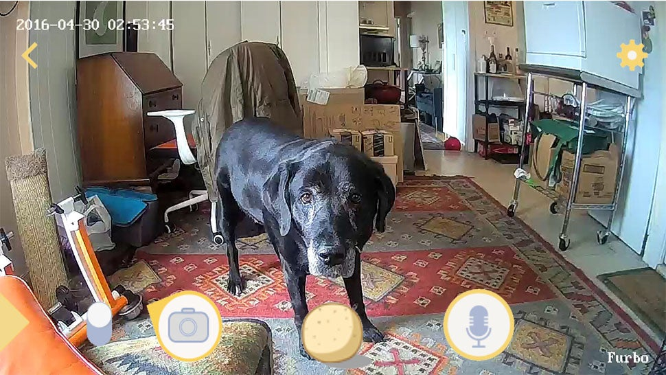 This Pet Camera Confused My Dog And Busted Landlord