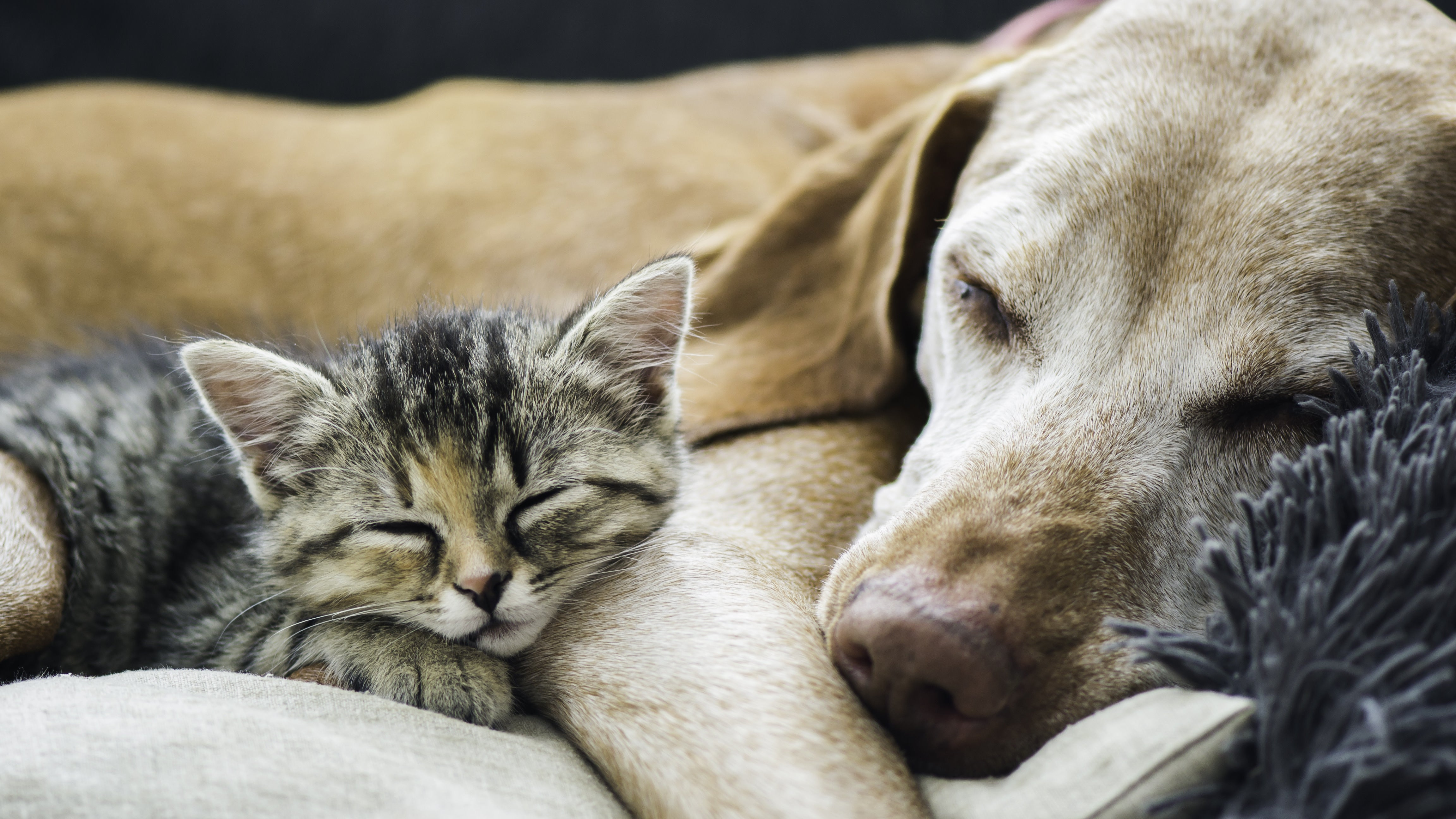 Foster A Pet Now, If You Can