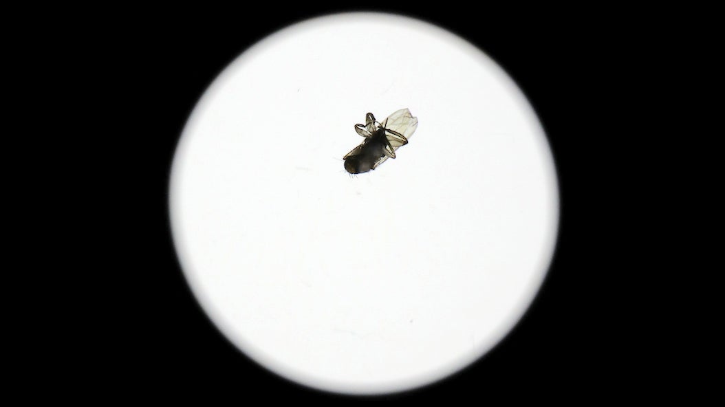 How Did This Full-Grown Fly End Up Inside A Sealed $2,000 Camera Lens?