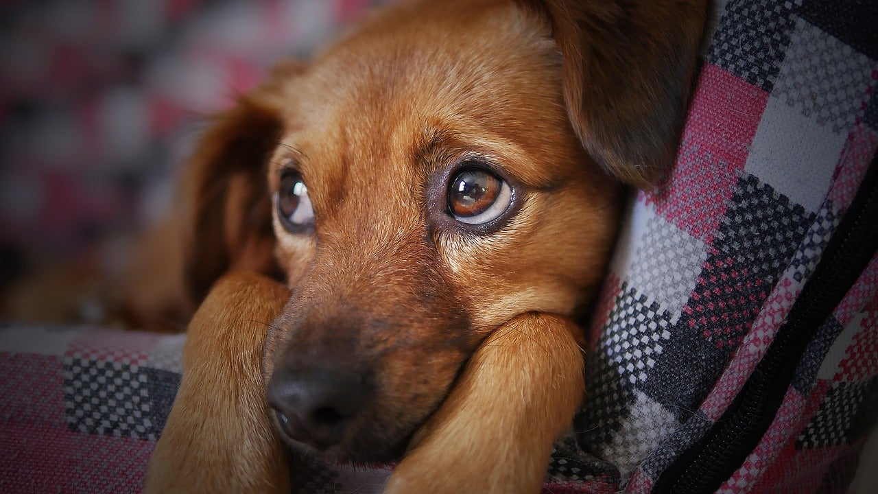 Veterinarians Say Pet Owners Are Hurting Animals To Get Opioids