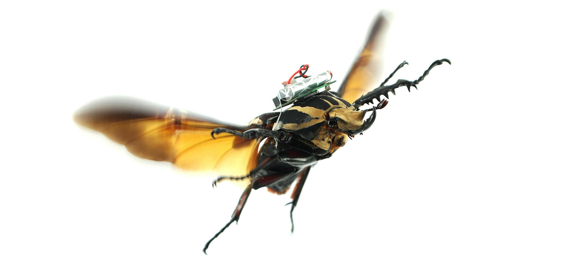 Mad Scientists Think Their Remote-Controlled Cyborg Beetle Could Replace Drones