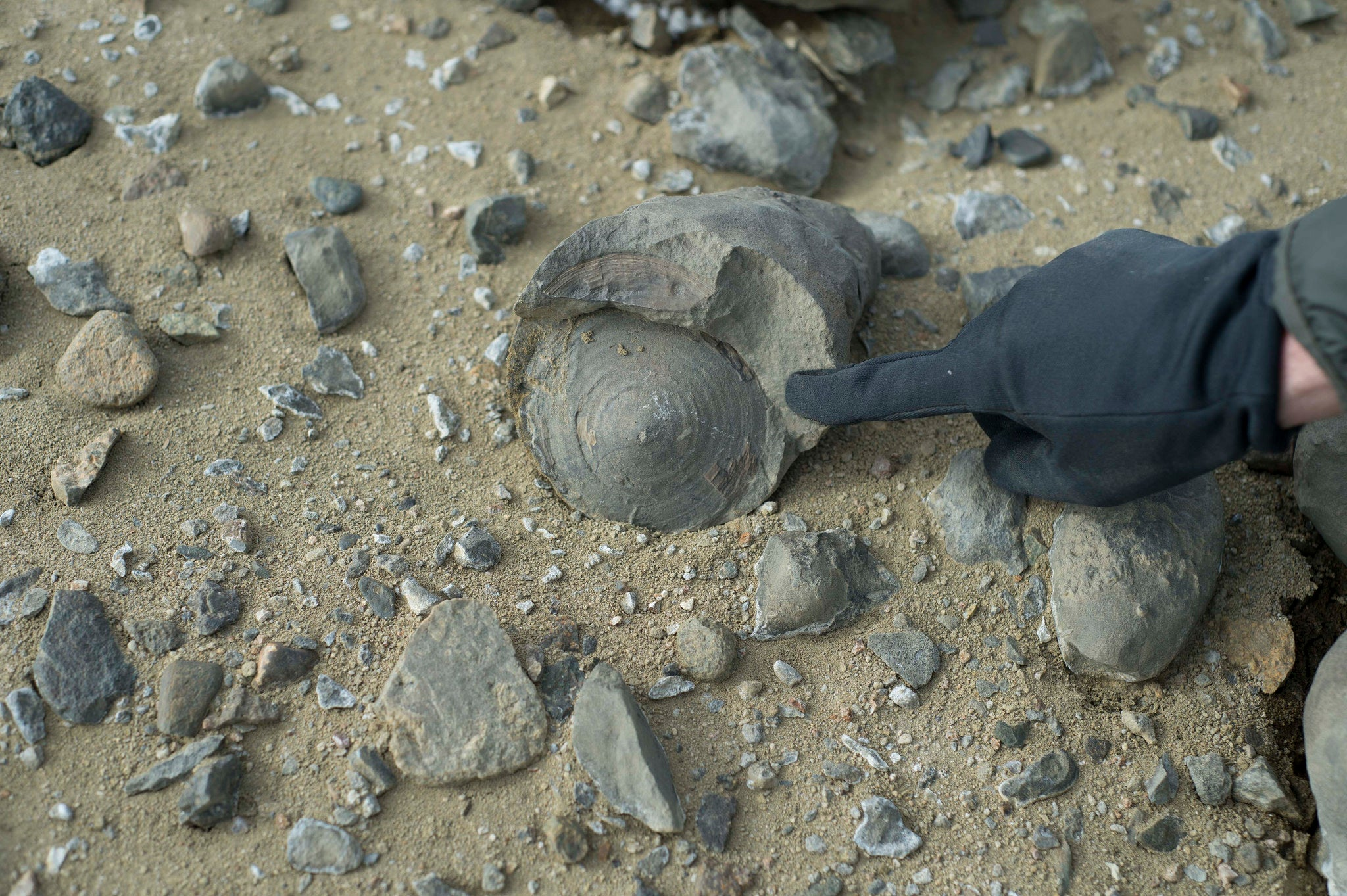 An Expedition to Antarctica Uncovered a Treasure Trove of 71-Million-Year-Old Fossils