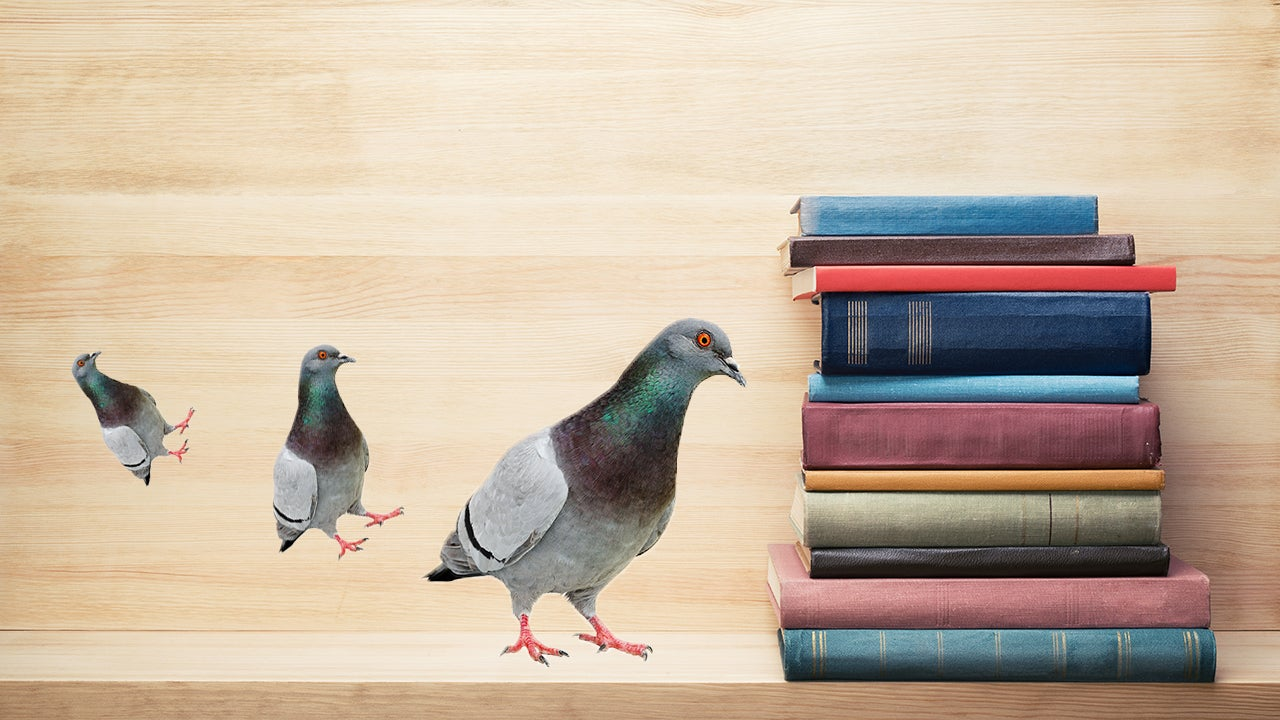 Pigeons Can Kind Of Read