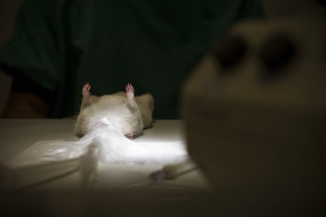 The Big Sleep: How Hibernation Could Overcome Life-Threatening Injury