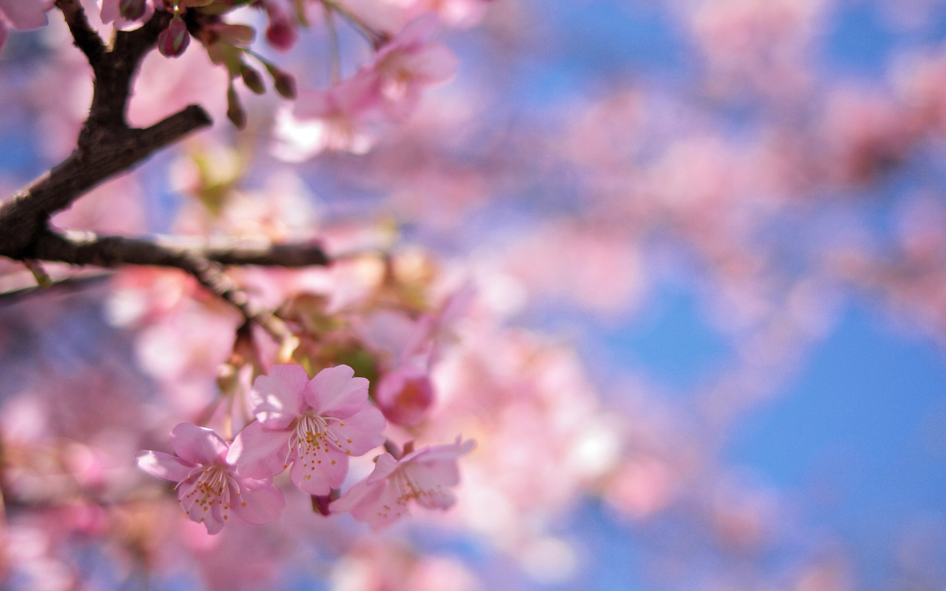 Put a Little Spring on Your Desktop with These Wallpapers