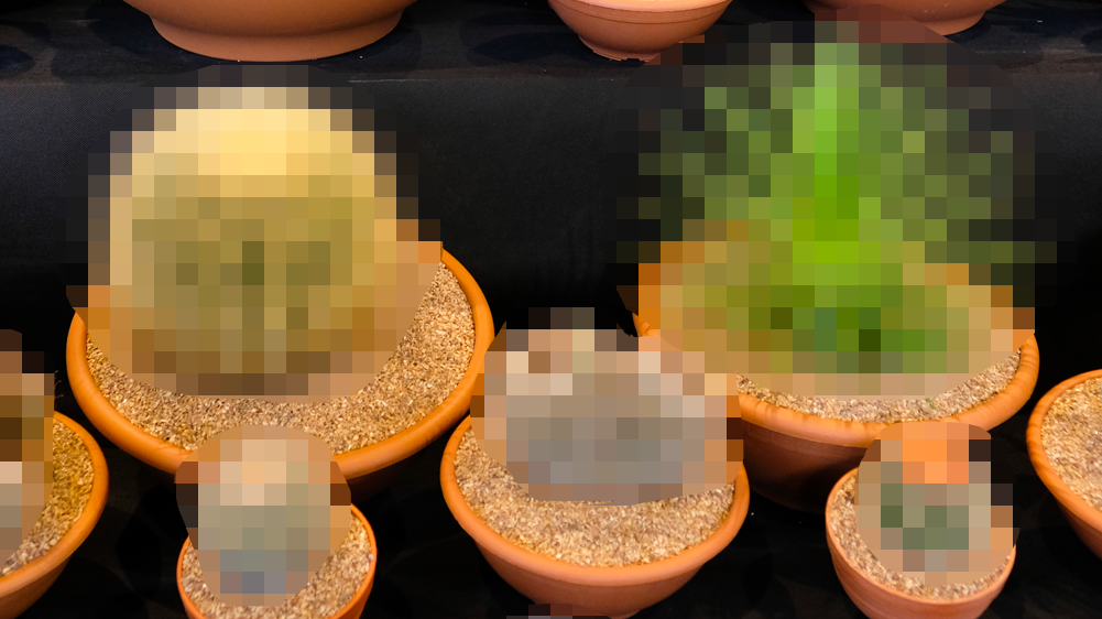 Drama Over Shirtless Selfie In Houseplant Hobby Group Inspires Wave Of Plant Nude Trolling