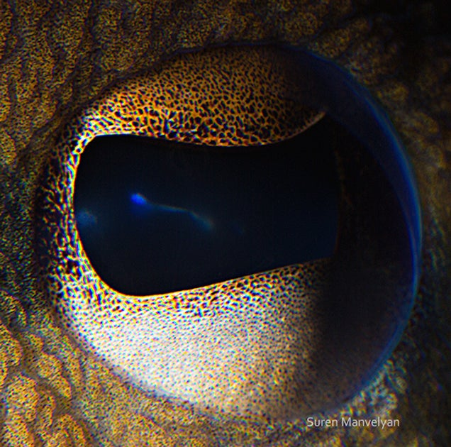 The eyes of animals look a lot like alien worlds