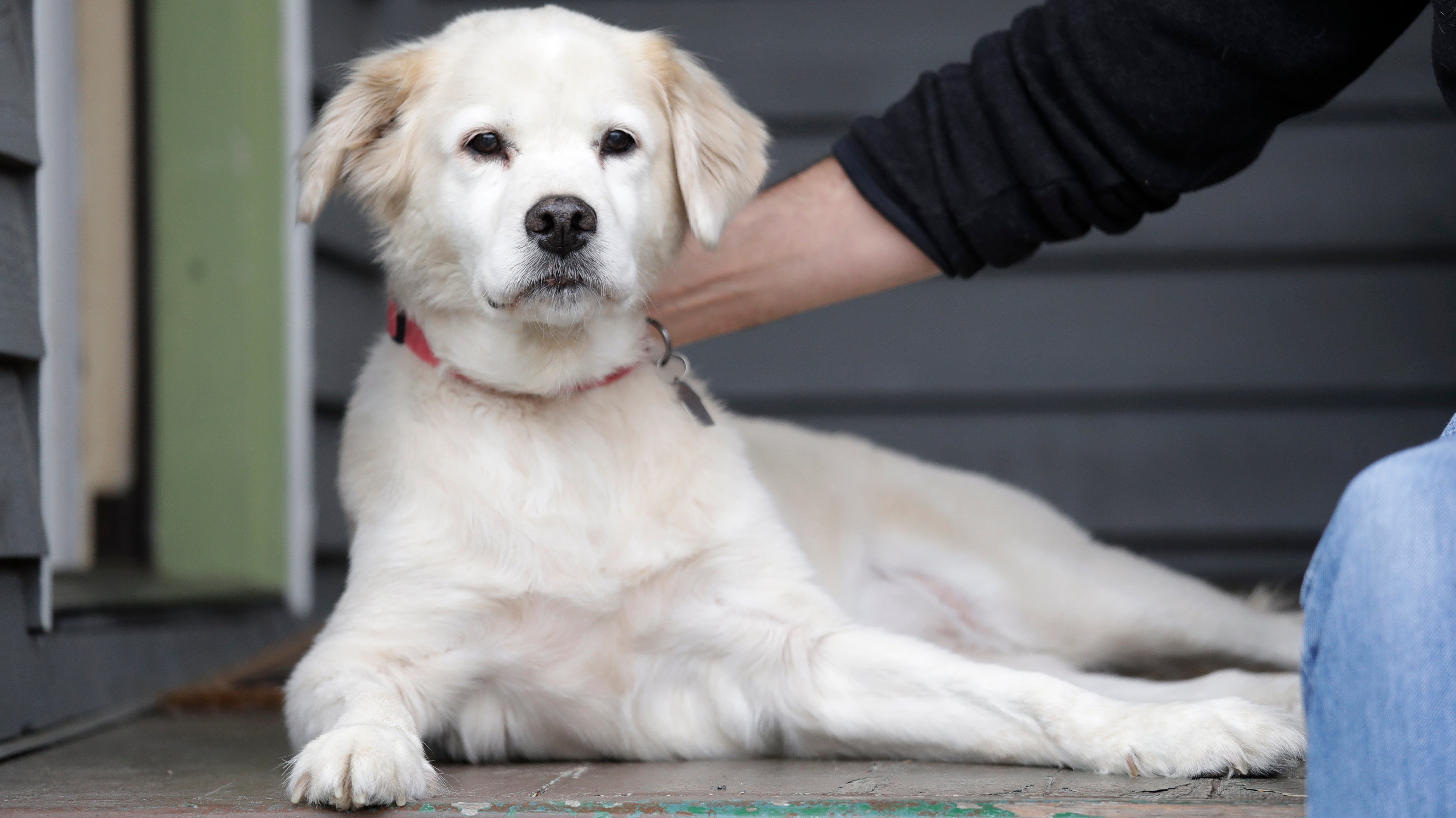 German Man Develops Fatal Infection After Being Licked By His Dog