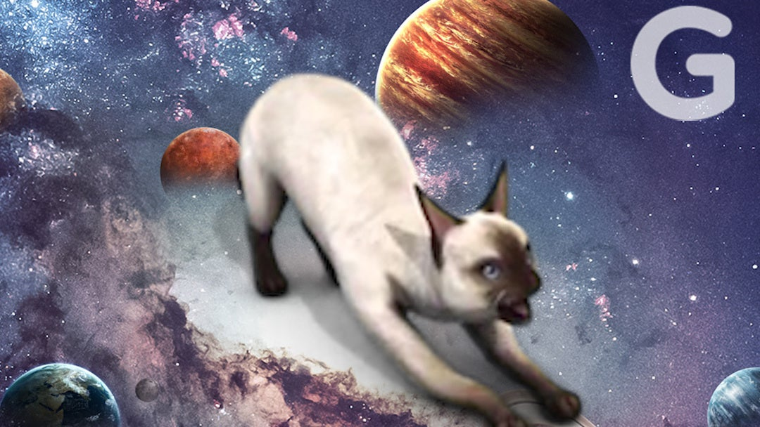 How Cats (And Other Good Animals) Helped Pave The Way For Human Spaceflight