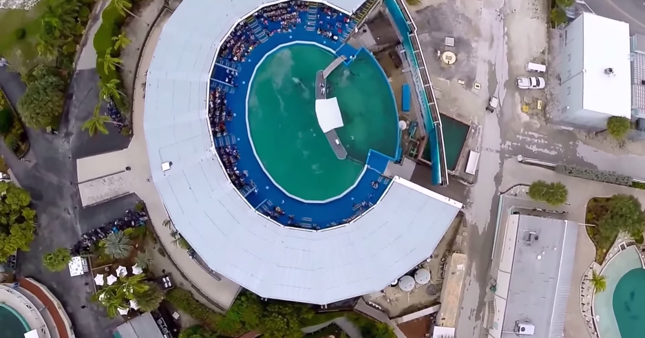 A Drone's-Eye View Of The Smallest, Saddest WhaleTank In The US