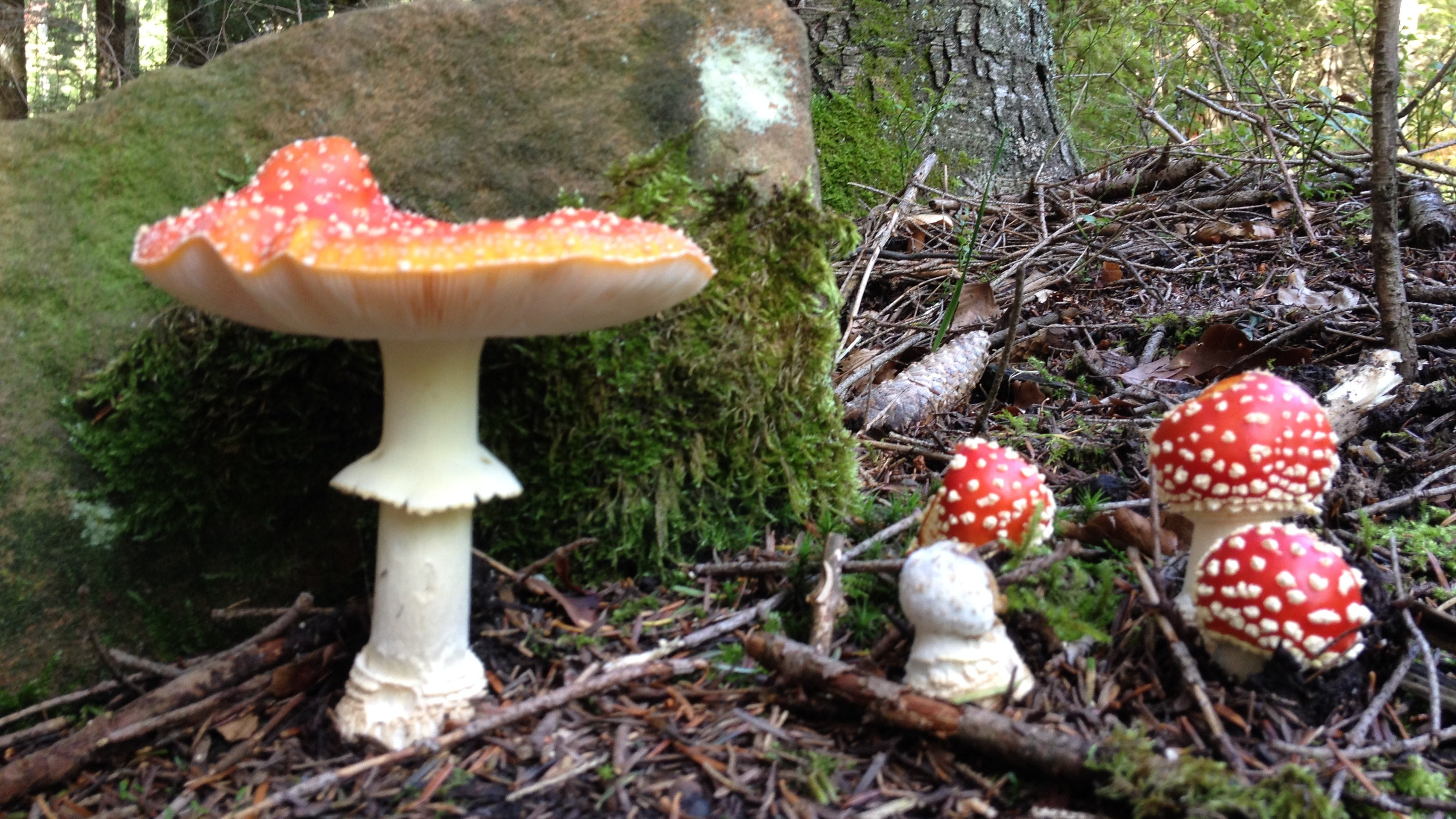 Yeah, Maybe Don't Use This App That Supposedly Identifies Poison Mushrooms
