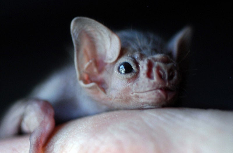 Some Vampire Bats Have Started Biting Humans (And It's Probably Our Fault)