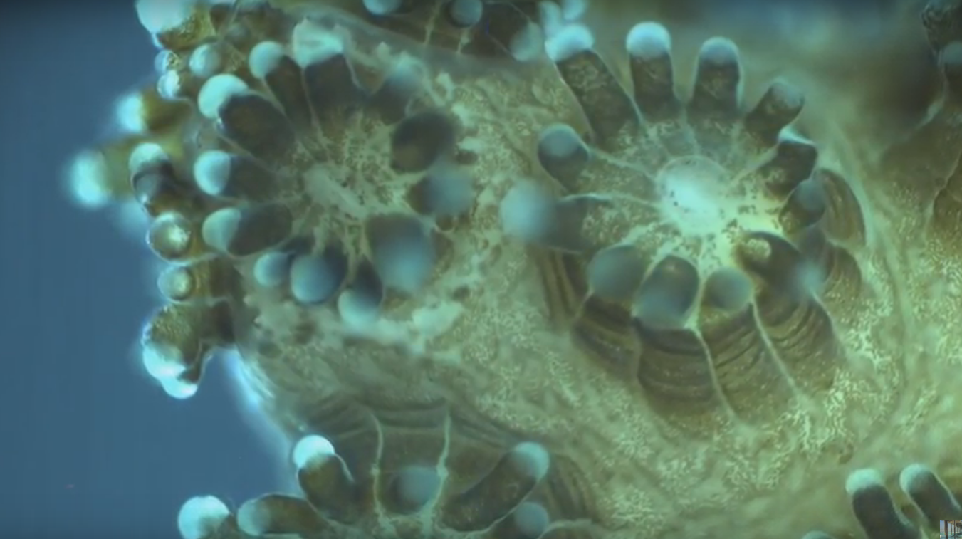 This Never Before Seen Microscopic Deep Sea Footage Is Other Worldly