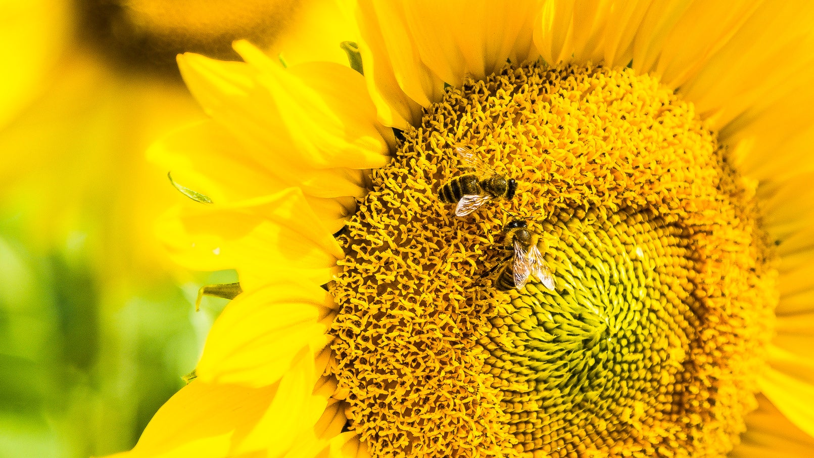 Intriguing New Research Suggests Honeybees Can Do Simple Maths