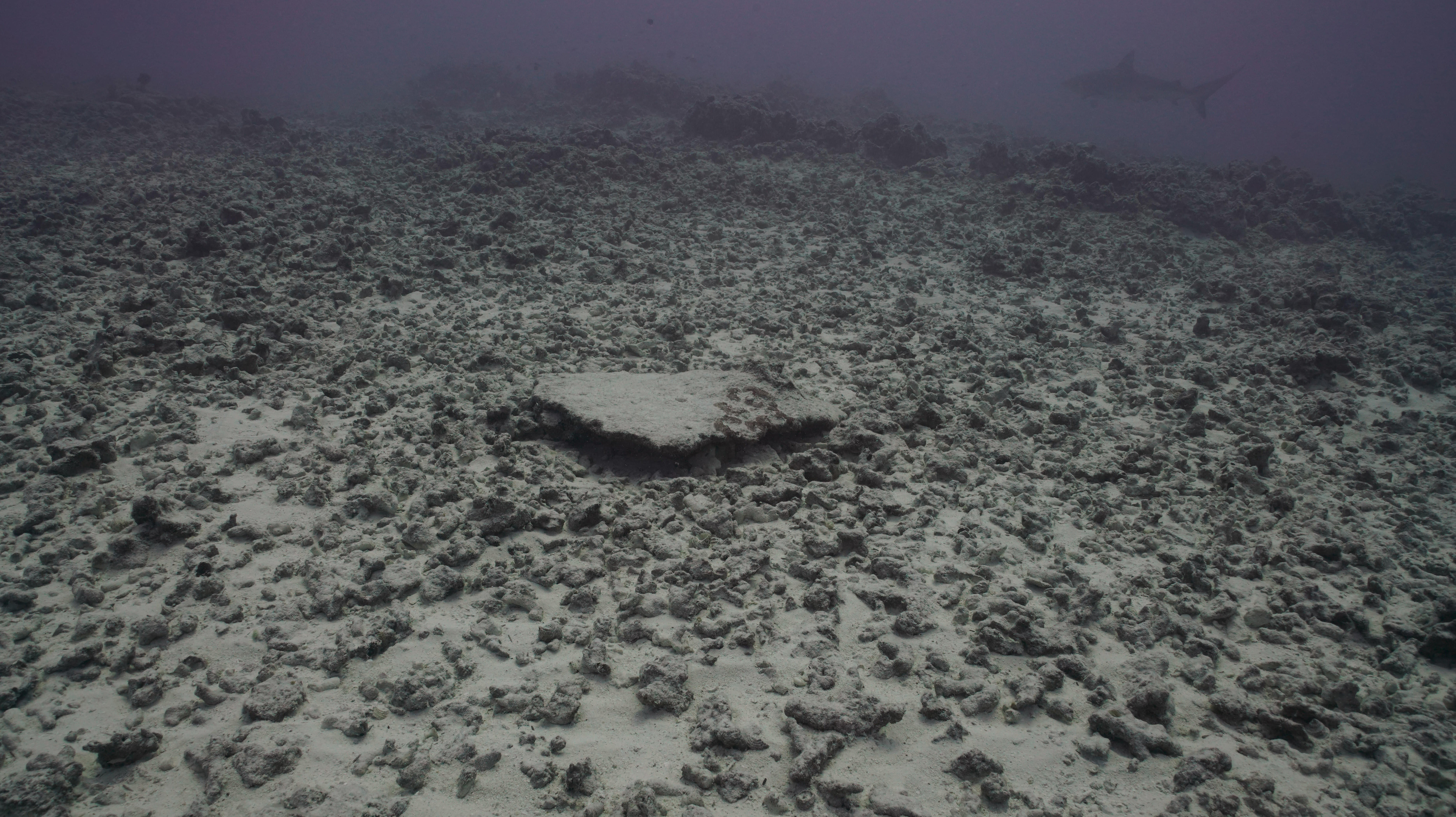 A Hurricane Obliterated Hawaii's Most Spectacular Reef