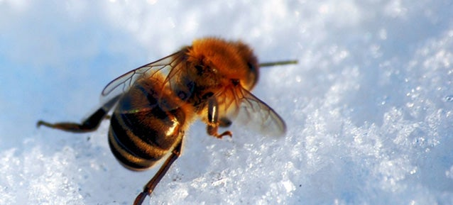 Where Do Insects Go in Winter?