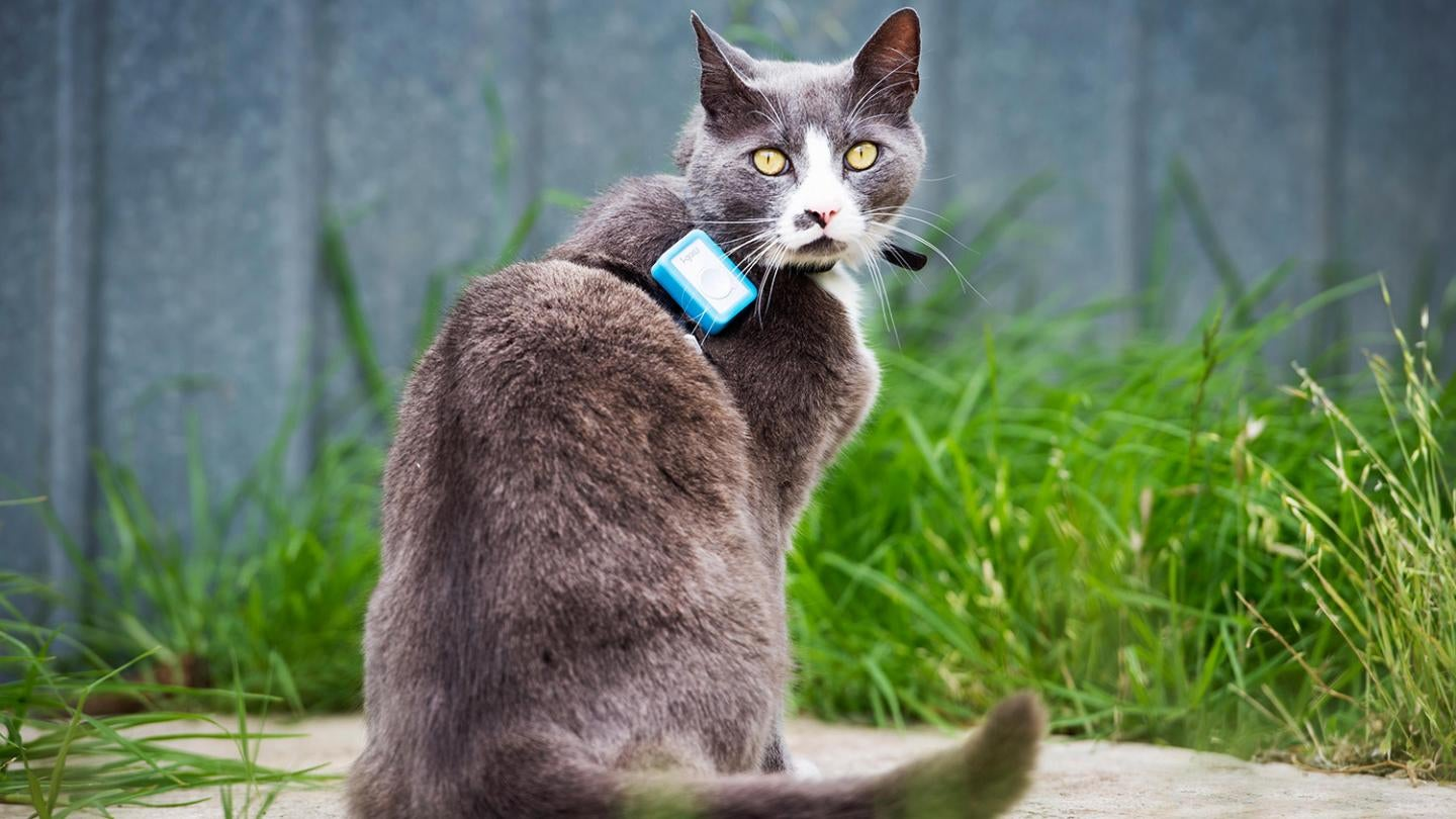 Scientists Put Trackers On Cats To Reveal The Extent Of Their Ecological Destruction